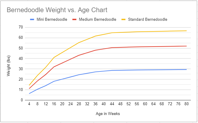 bernedoodle weight vs. age chart