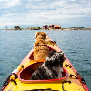 best kayak for two dogs
