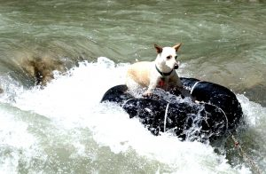 dog floats for river