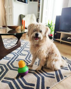 dog separation anxiety toys