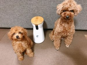 dog toys to help with separation anxiety