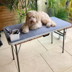 grooming a labradoodle