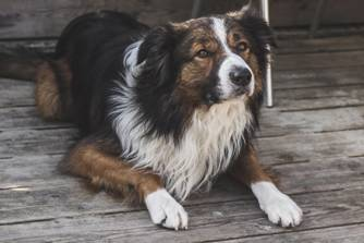 Rafter E Ranch Border Collies