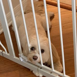 puppy gates for stairs