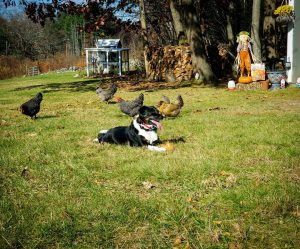 wireless dog fence for 1 acre