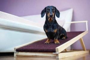 Best Adjustable Dog Ramp – Top 9 Picks