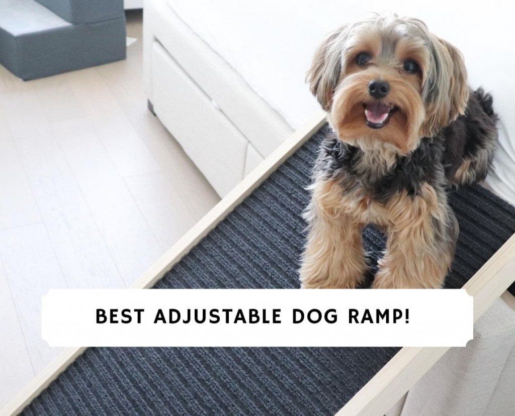 Best Adjustable Dog Ramp