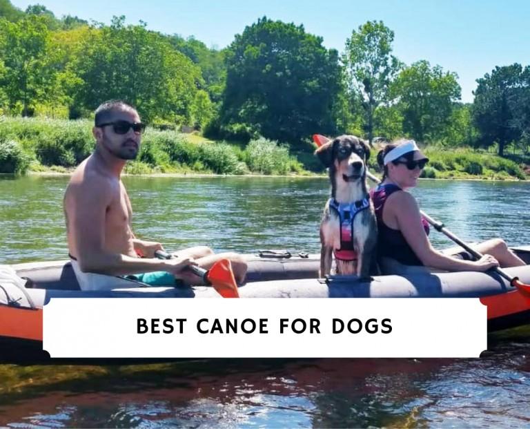 Best Canoe for Dogs