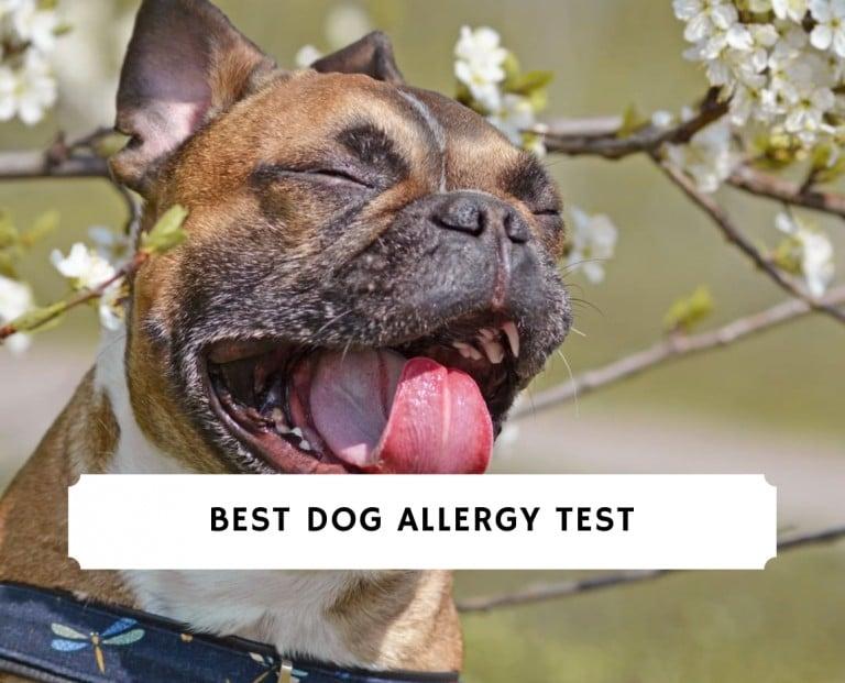 Best Dog Allergy Test