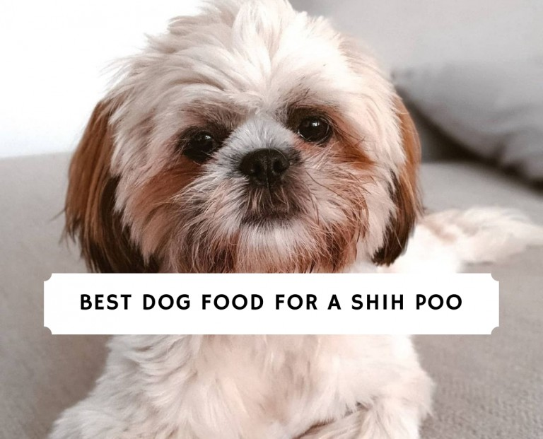Best Dog Food for a Shih Poo