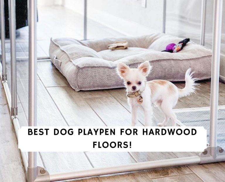 Best Dog Playpen for Hardwood Floors