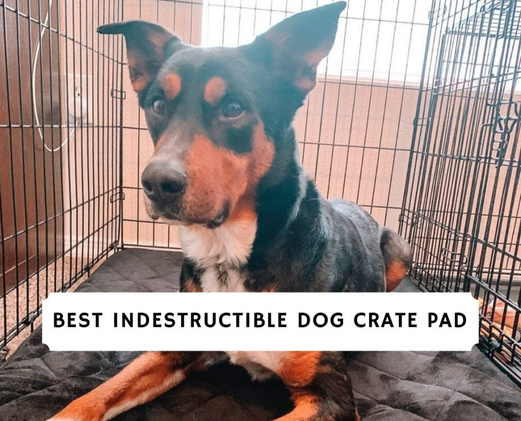 Best Indestructible Dog Crate Pad