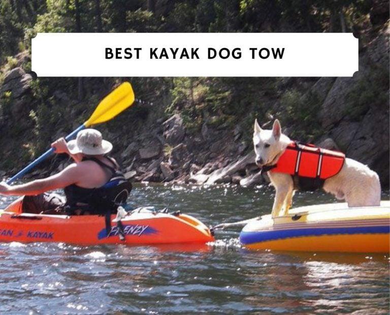 Best Kayak Dog Tow