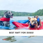 Best Raft for Dogs