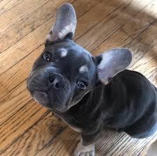 Buckeye Bulldog Rescue Ohio