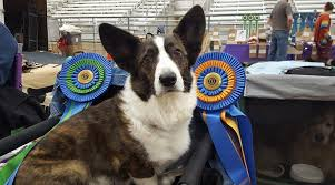 Cardigan Welsh Corgi National Rescue Trust