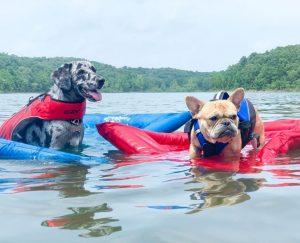 Dog rafts