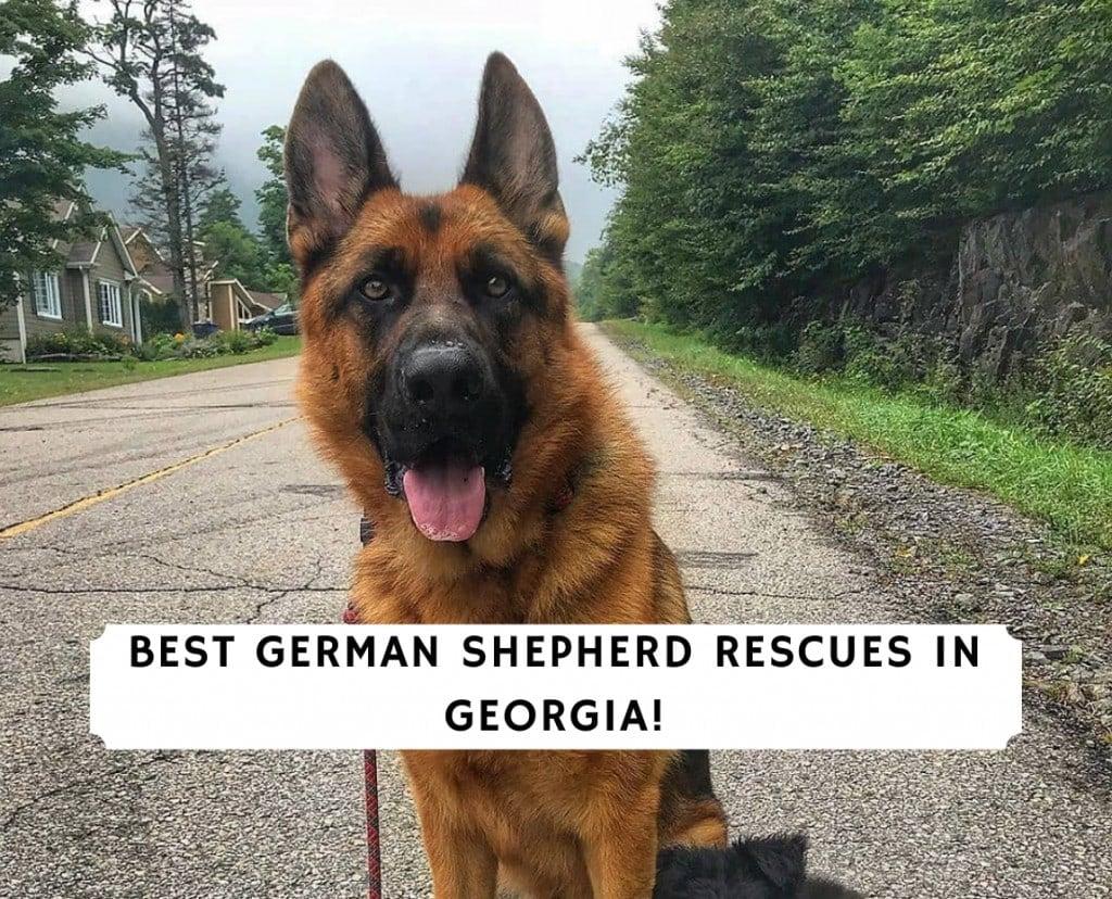 German Shepherd Rescues in Georgia