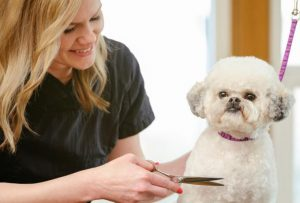 Grooming: How much do they require?