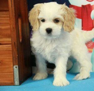 Parkers Precious Puppies