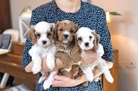 Puppies by Chris Martin