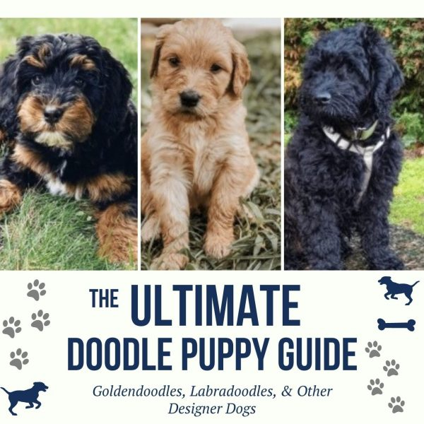 The Ultimate Doodle Puppy Guide.png