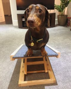 adjustable ramp for dogs