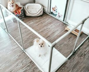dog playpen on hardwood floors