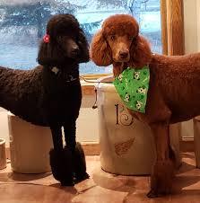 Musique Standard Poodles