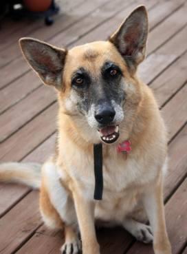 Precious Pets Adoption League