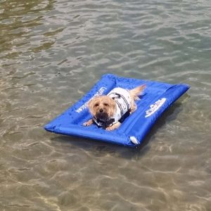 kayak tow behind for dogs