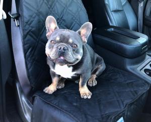 pet hair car seat covers