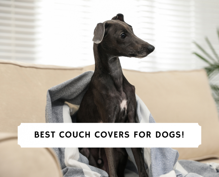 Best Couch Covers For Dogs