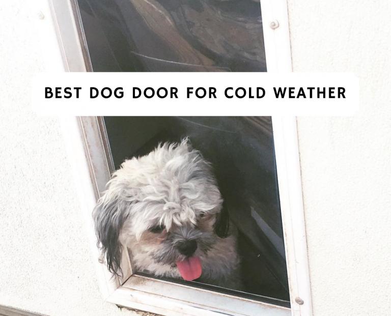 Best Dog Door for Cold Weather