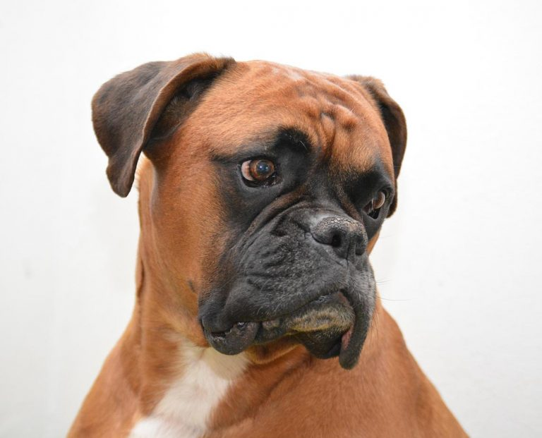 Boxers with a Sensitive Stomachs