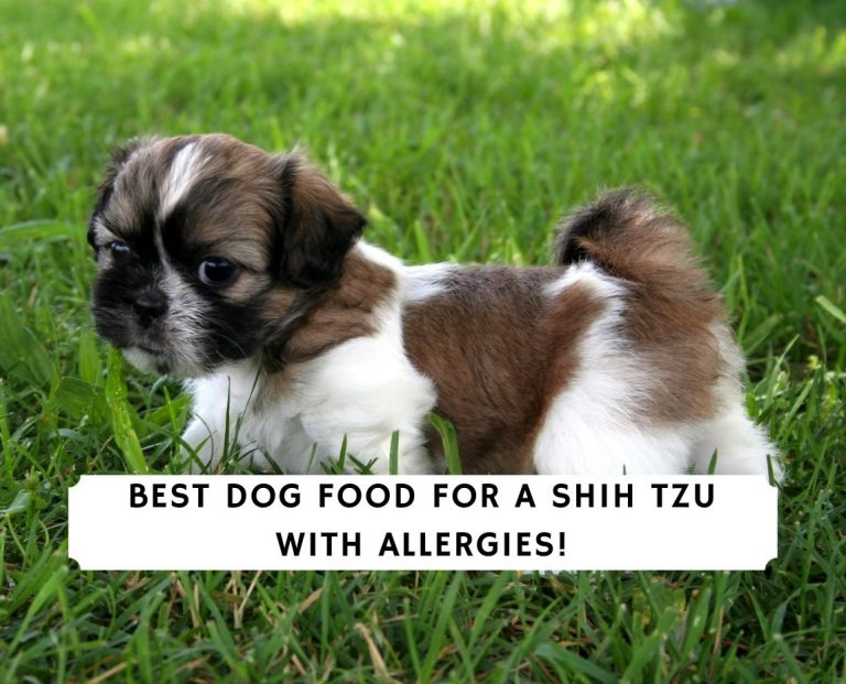 Best Dog Food for a Shih Tzu with Allergies