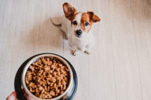 Best Dog Food to Reduce Pooping