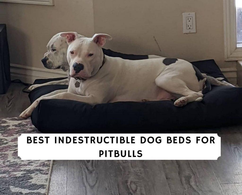 Best Indestructible Dog Beds for Pitbulls
