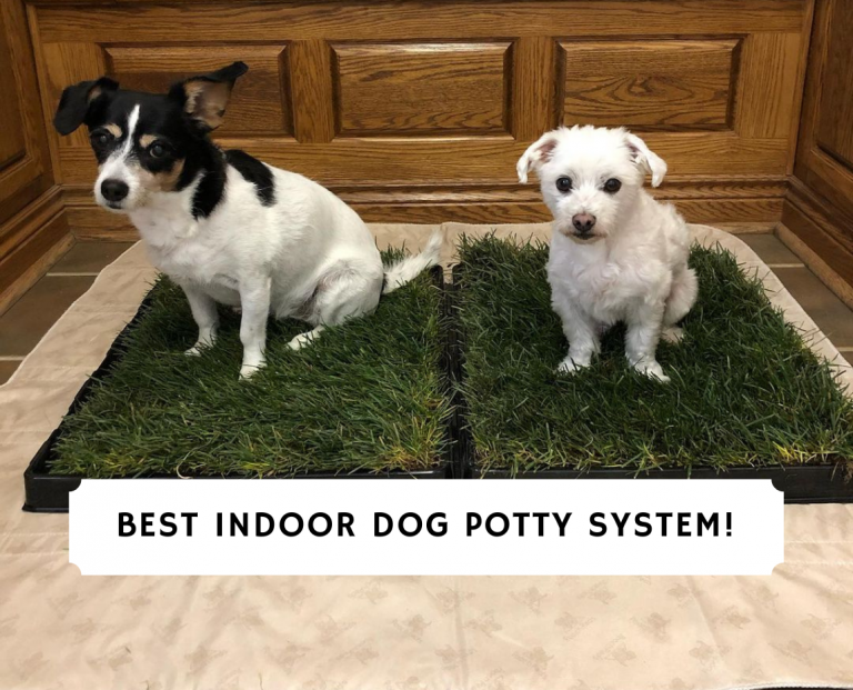 Best Indoor Dog Potty System
