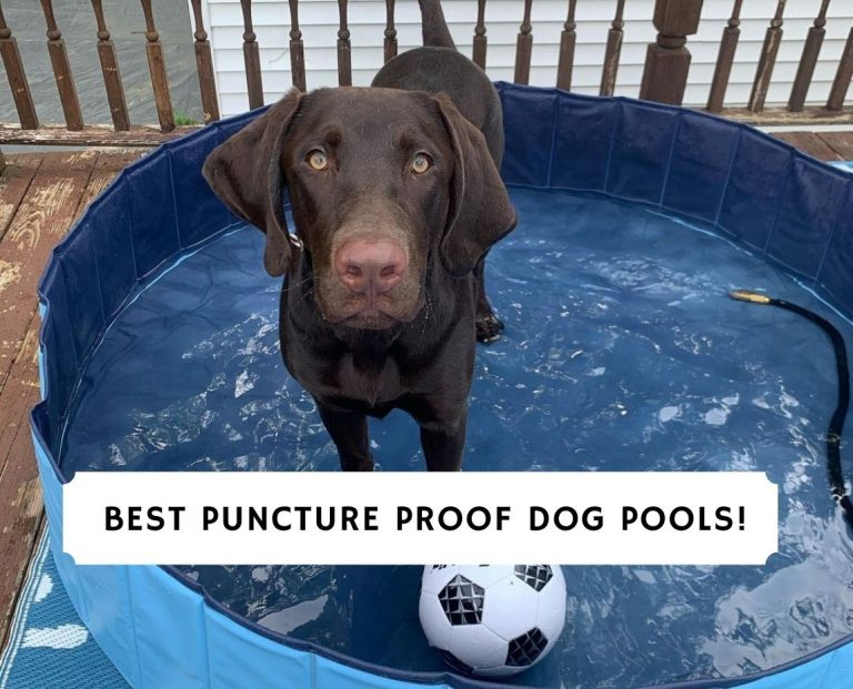 Best Puncture Proof Dog Pools