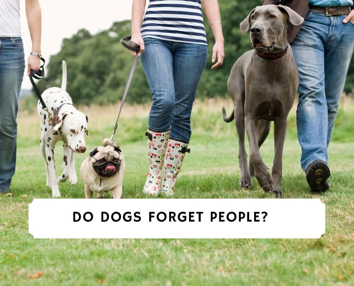 Do Dogs Forget People