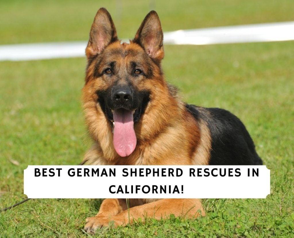 German Shepherd Rescues In California