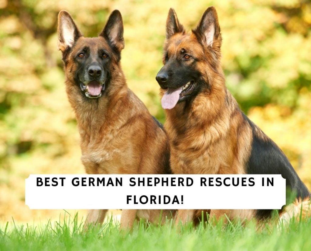 German Shepherd Rescues In Florida