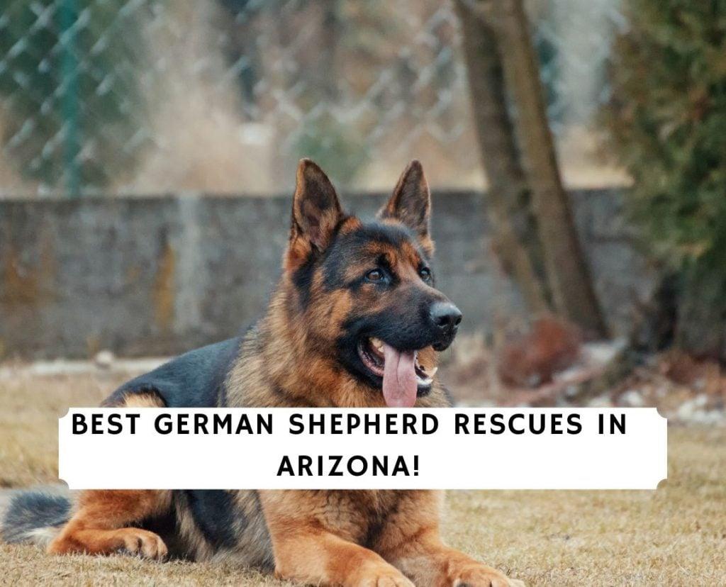 German Shepherd Rescues in Arizona