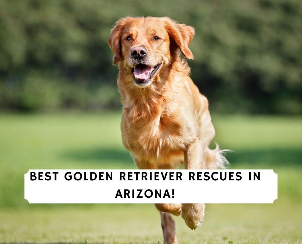 Golden Retriever Rescues in Arizona