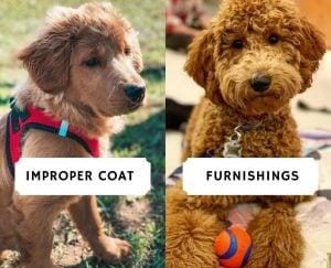 Improper Coat vs Furnishings