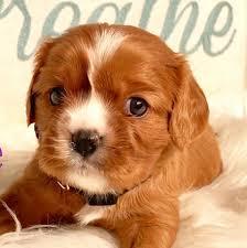 Puppy's N Love