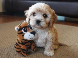 Riverside Puppies