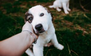 Tips for Interacting with a Dog that Has Been Lost