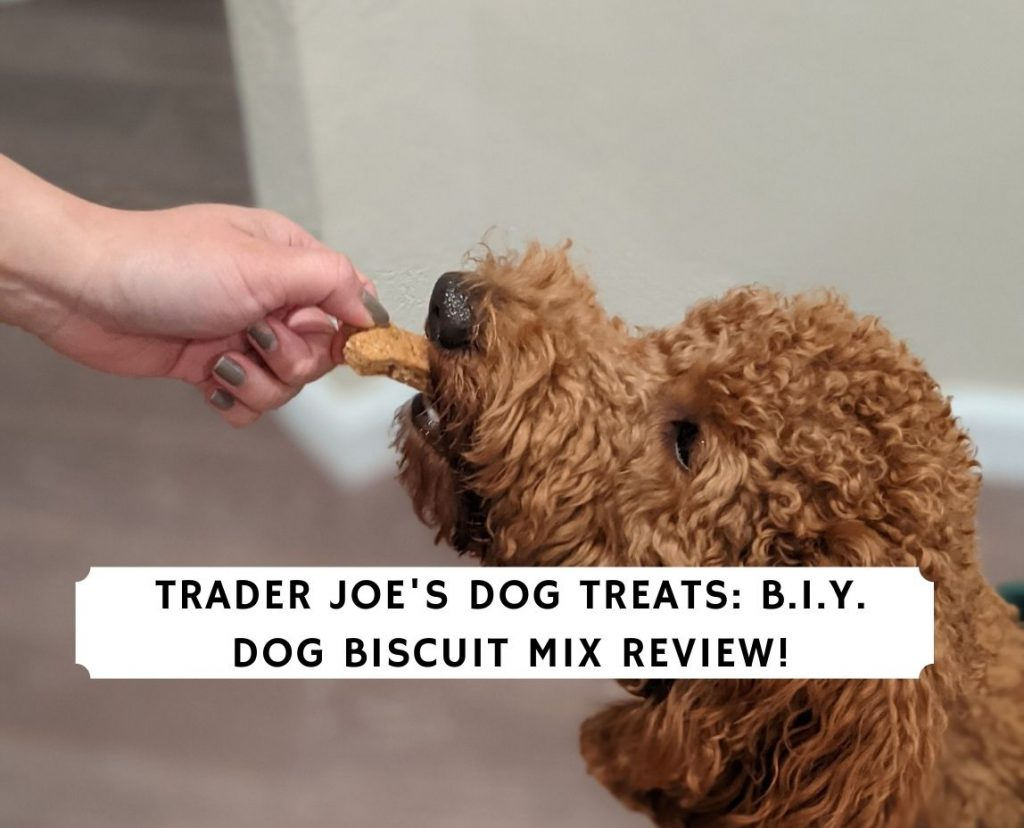 Trader Joe's Dog Treats_ B.I.Y. Dog Biscuit Mix Review!